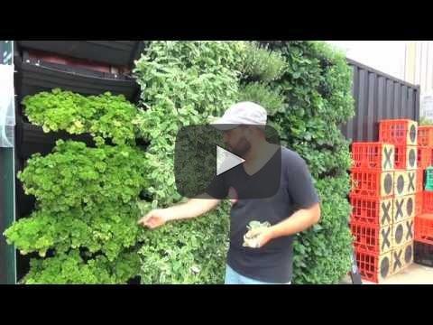 wall garden 2.jpg