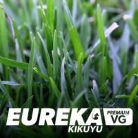 Eureka Kikuyu VG - Instant Turf