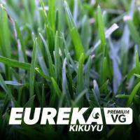 Eureka VG Premium Kikuyu (Instant Turf)