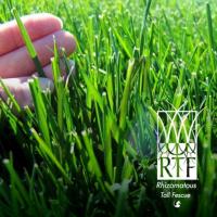 RTF (Instant Turf)